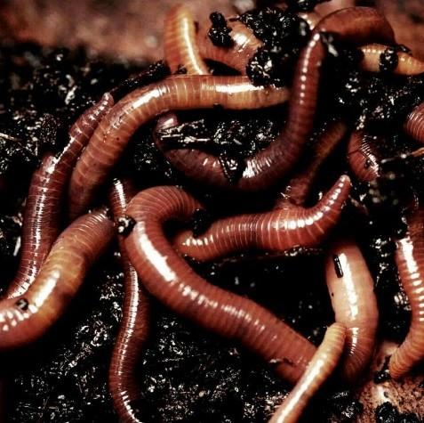 моем червей
