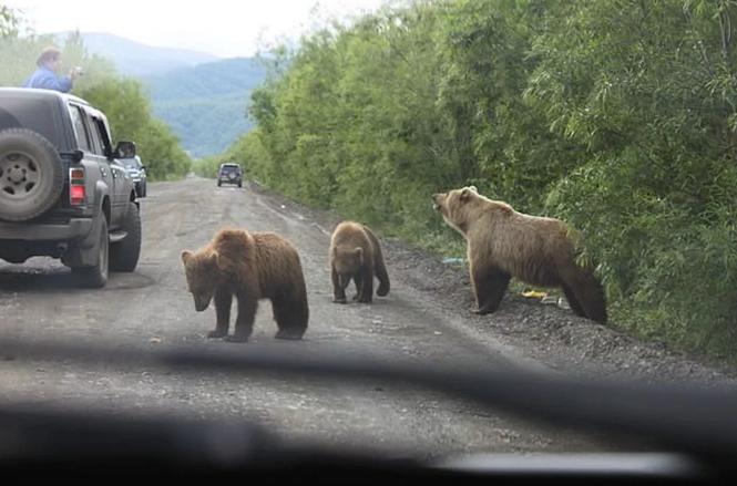 Камчатские медведи грабят местных охотников