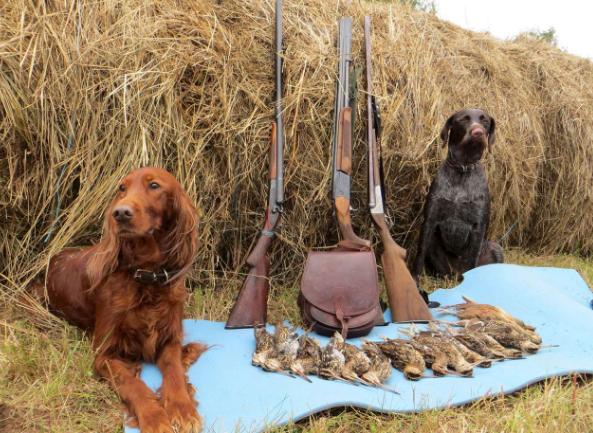 Нижегородским охотникам распределяют льготные разрешения на охоту