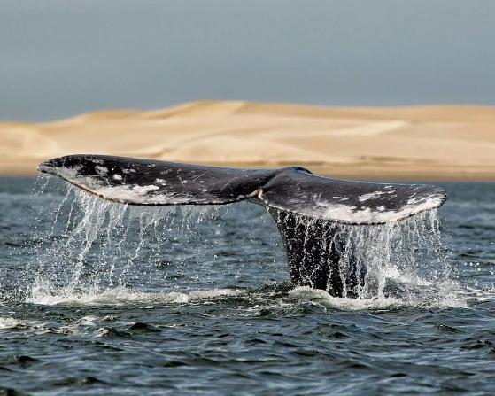 Охота на чукотских китов началась с опозданием