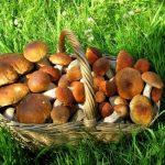 Рязанские охоты идут в леса за летними грибами