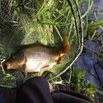 Рыбалка на карпа в летнюю жару