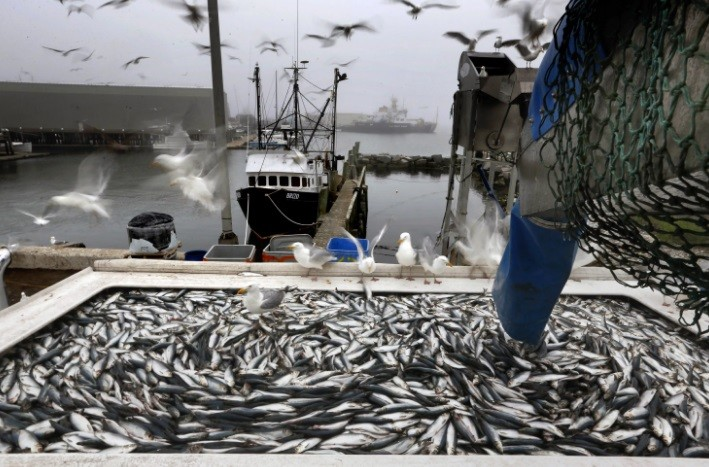 За незаконную рыбалку был наказан целый колхоз