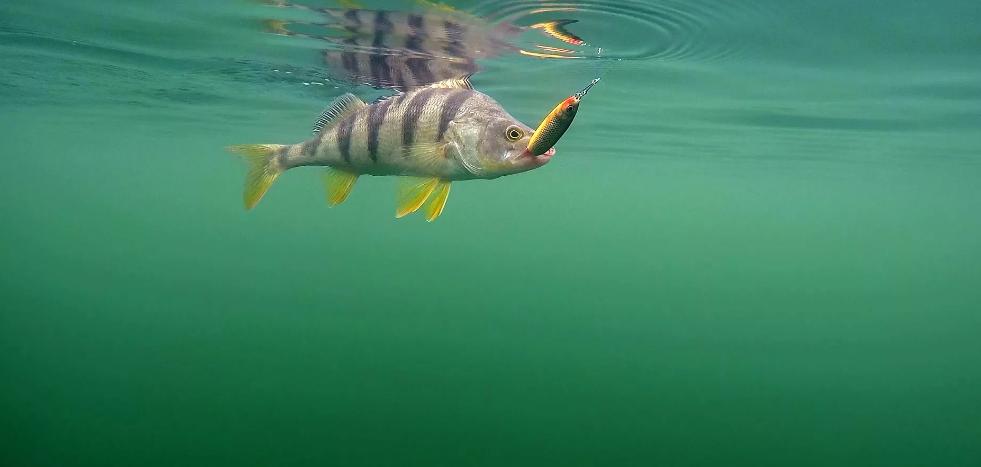 Астрахань непротив ограничить вывоз рыбы из региона