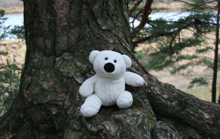 Браконьеры повелись на плюшевого медведя фиолетового цвета, за что и были наказаны