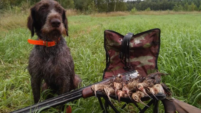Дополнительные правила охоты для Курских охотников