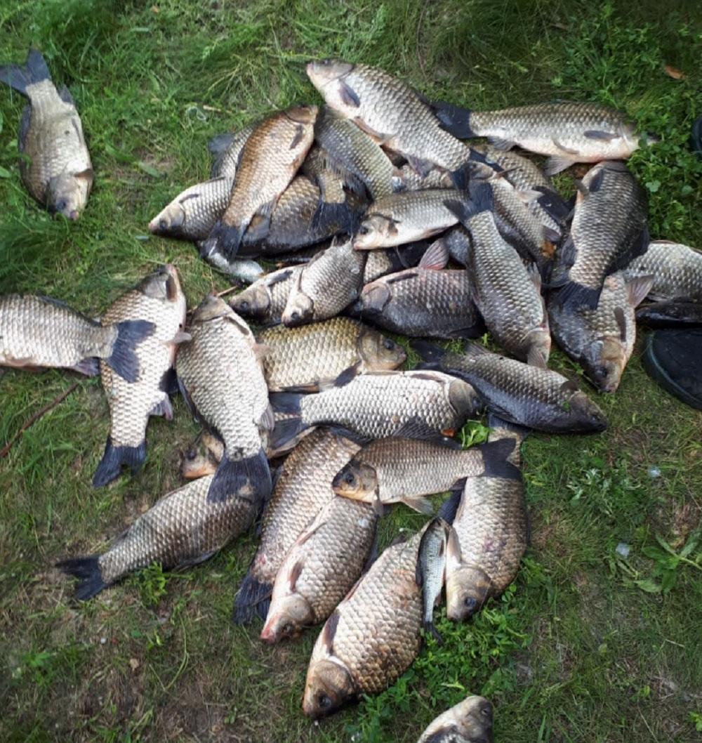 Как сохранить рыбу на рыбалке в жару
