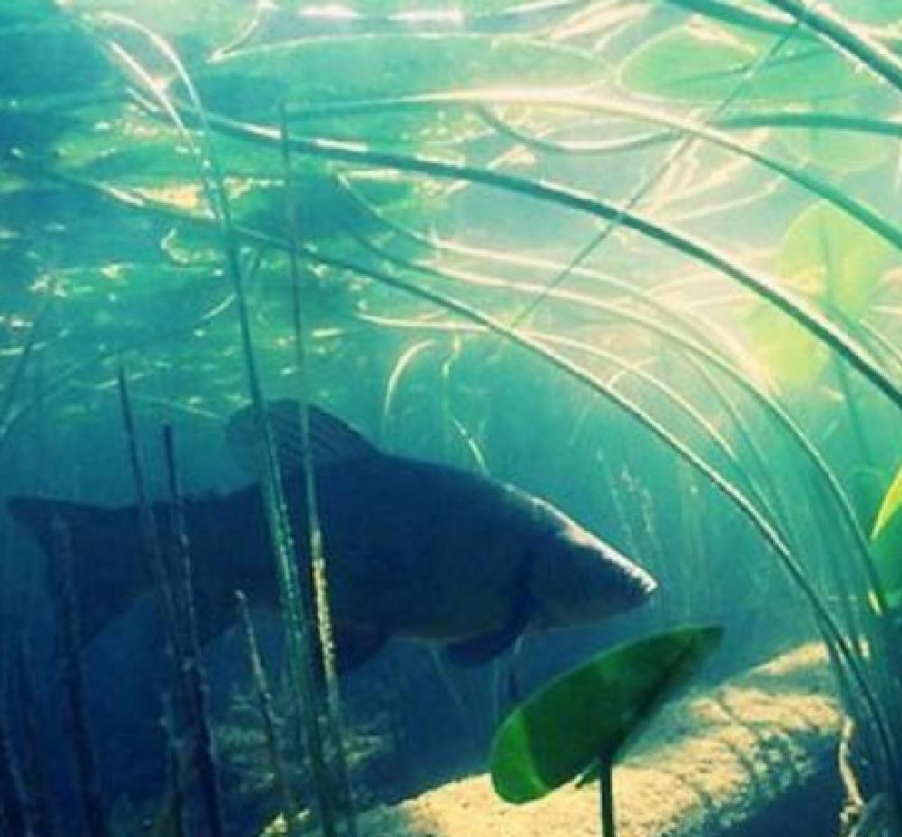 Ловля линя летом - где искать рыбу