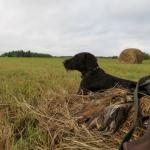 Медведев ужесточил наказание за браконьерство