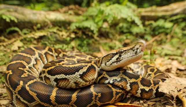 На Садоводе обнаружена змея