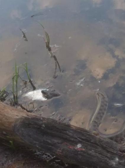 Наглая змея не постеснялась украсть улов у астраханских рыбаков