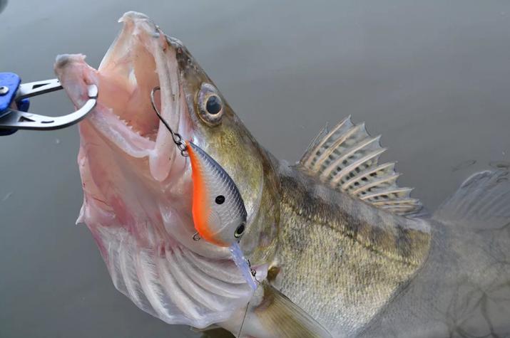 Нужна ли рыбе эвтаназия? Или это лишь человеческая прихоть?