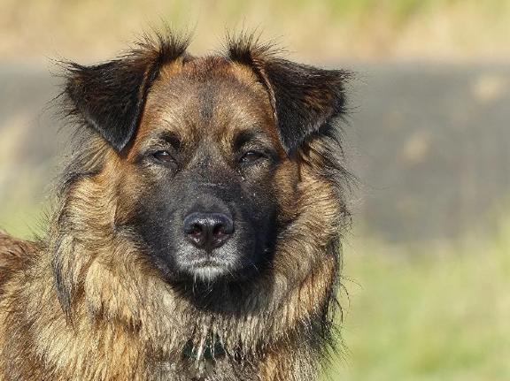 Охоту на бродячих собак организовали власти города