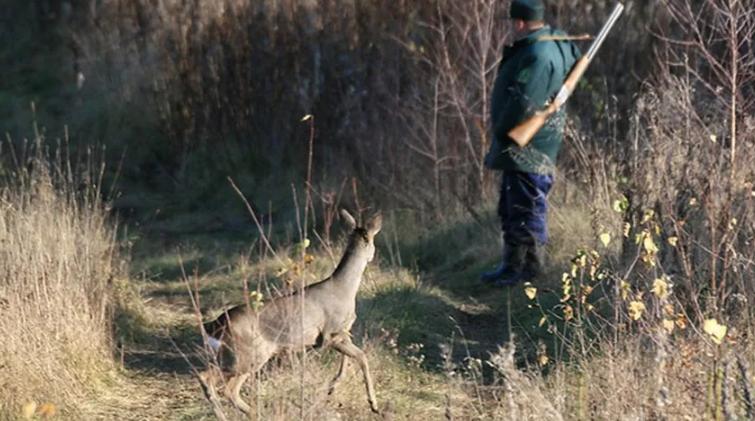 Омский охотник ответит за убитую косулю и лису
