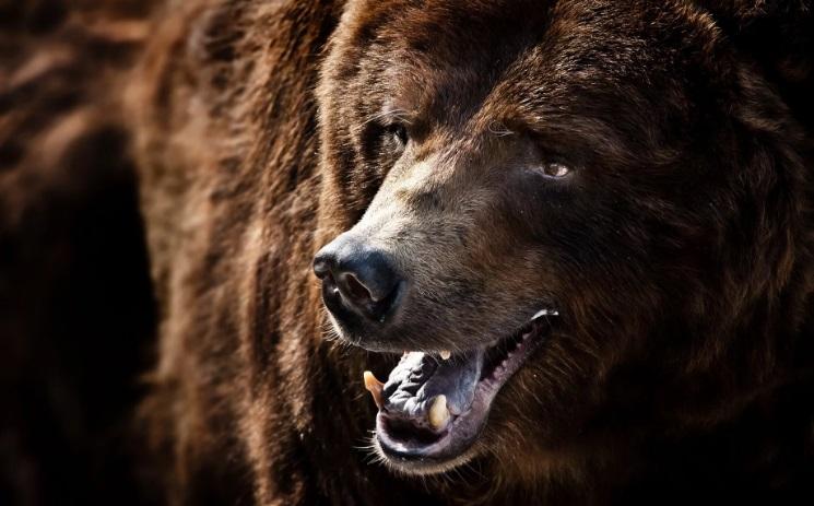 Предупреждали же: не кормите медведя!