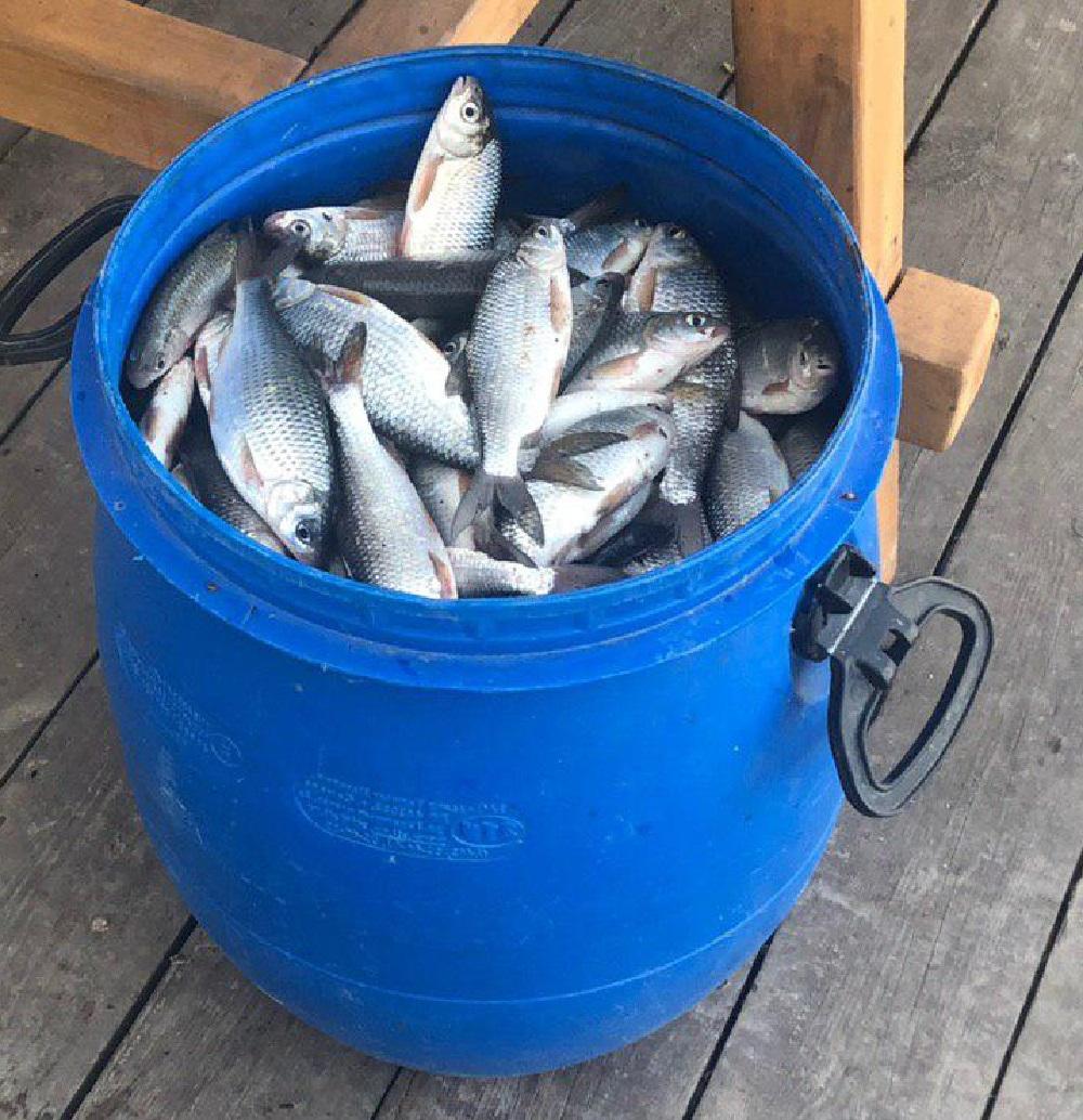 Рыбалка в Астрахани - какую рыбу ловим