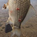 В Астрахани рыбаки ловят рыбу с кроваво-красными пятнами на теле