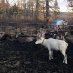 Власти Нижнего Новгорода планируют легализовать загонную охоту на животных