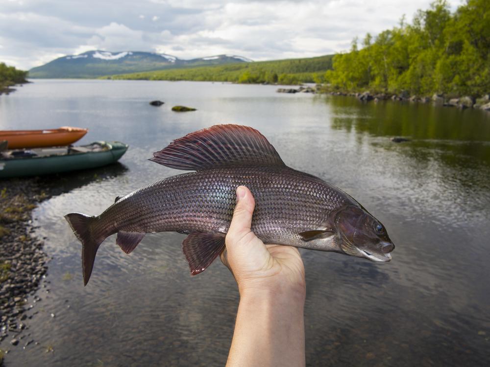 Какую рыбу ловим в Карелии