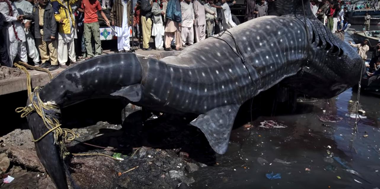Девятка самой крупной пойманной рыбы в Мире
