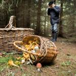 Грибы – это зависимость? Число потерявшихся охотников побило все рекорды в этом году