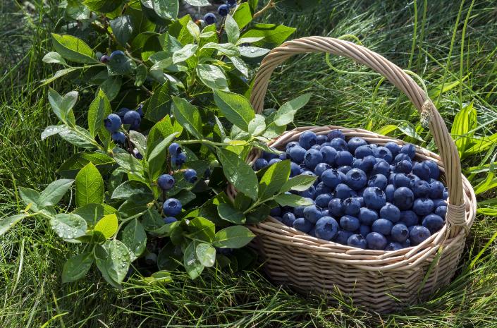 Грибы и ягоды собираем, исключительно, в срок