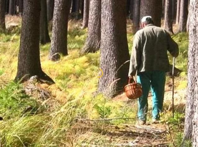 Кто такие лесные «потеряшки»? Как не потеряться в лесу