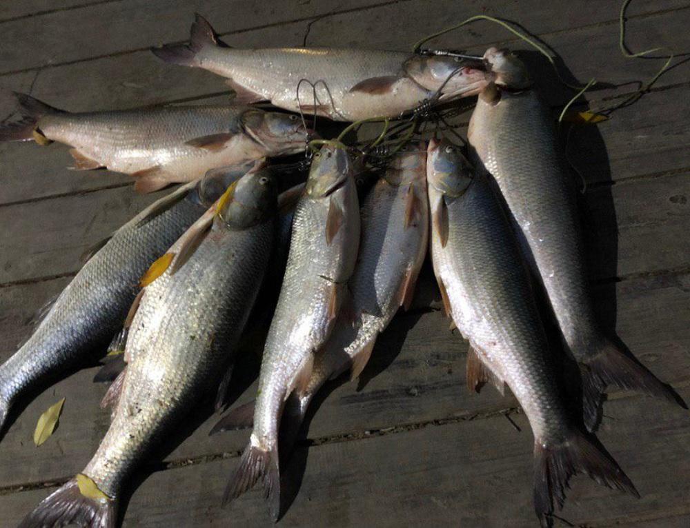 Ловля рыбы в перспективных местах