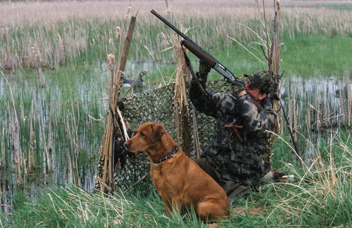 Охота начнется с 17 августа