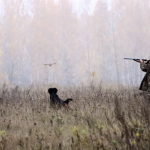Охотничье хозяйство задолжало кировчанину денег