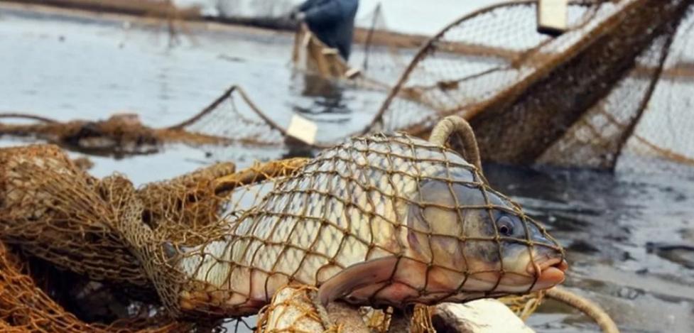 Рыбалка обошлась в 130 тысяч, а затем обернулась уголовным делом