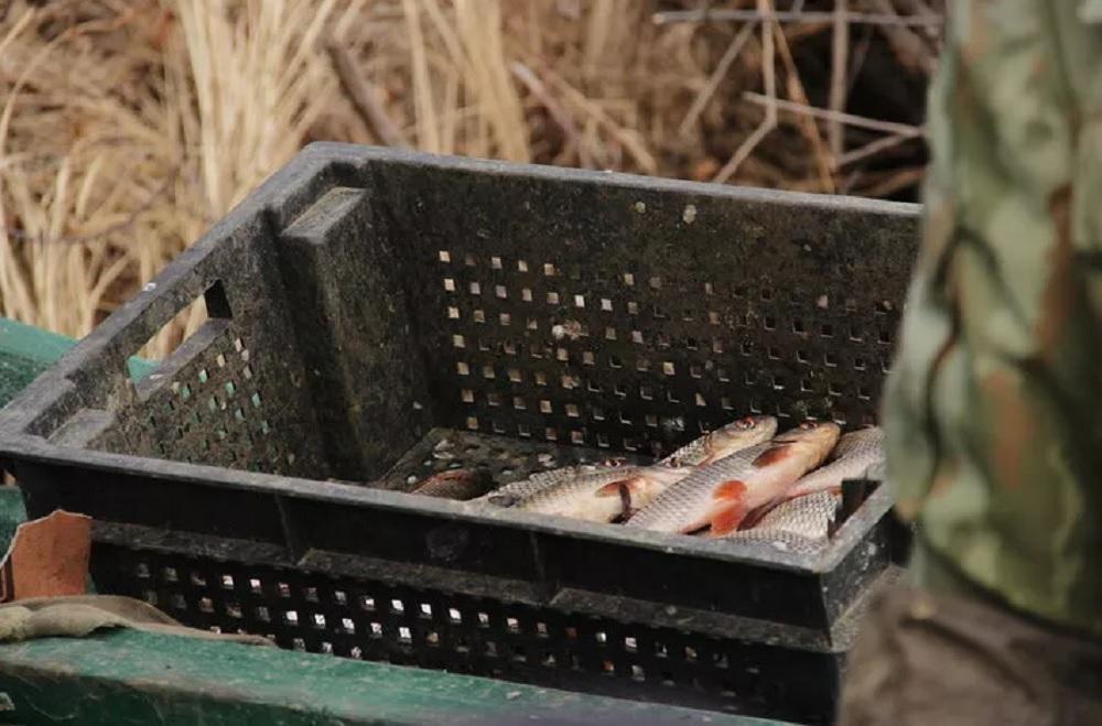 В Саратове можно идти на законную рыбалку