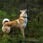 Запрет на охоту из-за выгула собаки