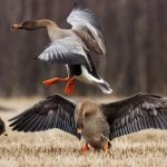 Изменения охоты коснулись Красноярского края