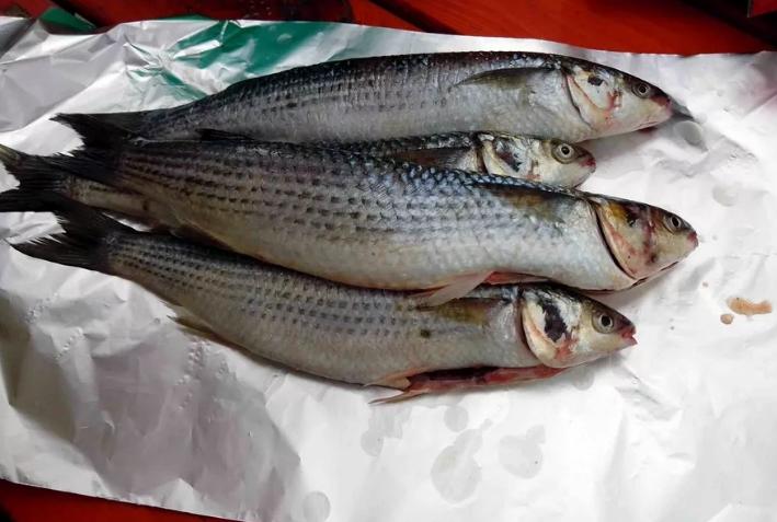 Креветок и кефалевых рыб ловить нельзя – необходимо защитить популяцию