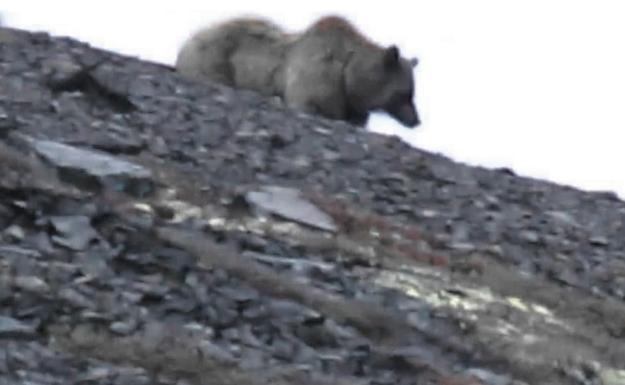 Медведь стал причиной волнений мурманских рыбаков