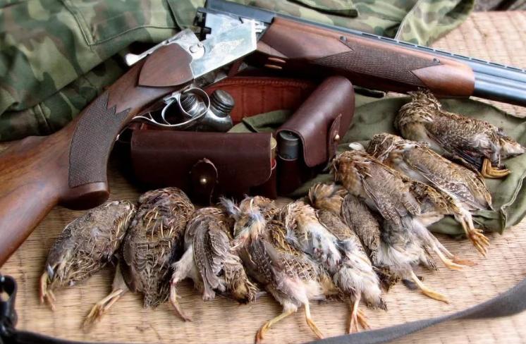 Охота на счищающих животных должна быть признана как браконьерство! - требует Европарламент