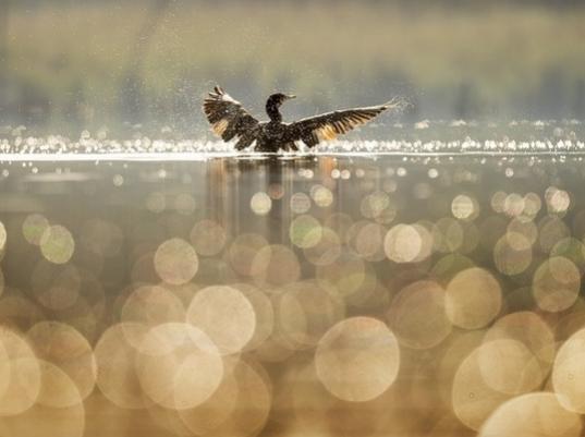 Охота в Волгограде начнется с 31 августа