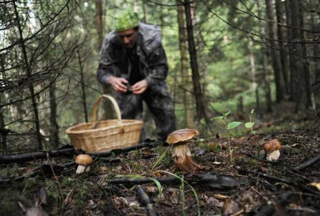 От грибов погибло более 10 человек по всей России