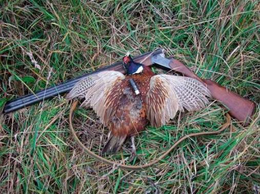 Подмосковная охота: привила и нормы охоты