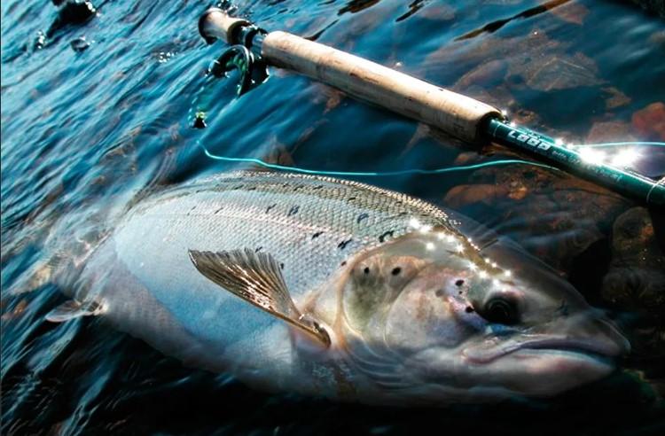 Рыбаки ловили лосося в день, когда этого делать нельзя