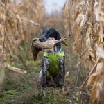 Сняты некоторые ограничения для омских охотников