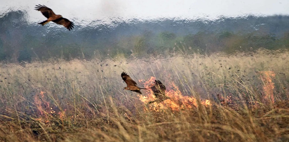 Стали известны первые жертвы от пожара в Сибири