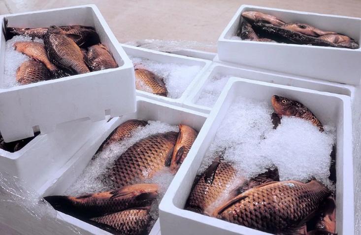 В грязном автомобиле запрещено перевозить рыбу