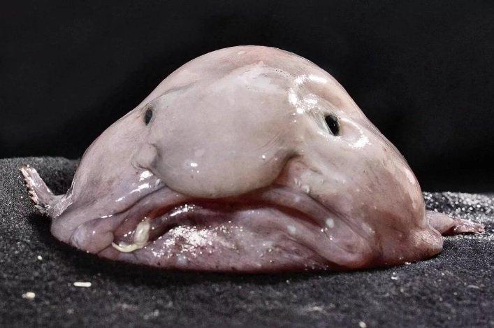 Внешний вид этих рыб, действительно, пугает. Ужасная десятка!