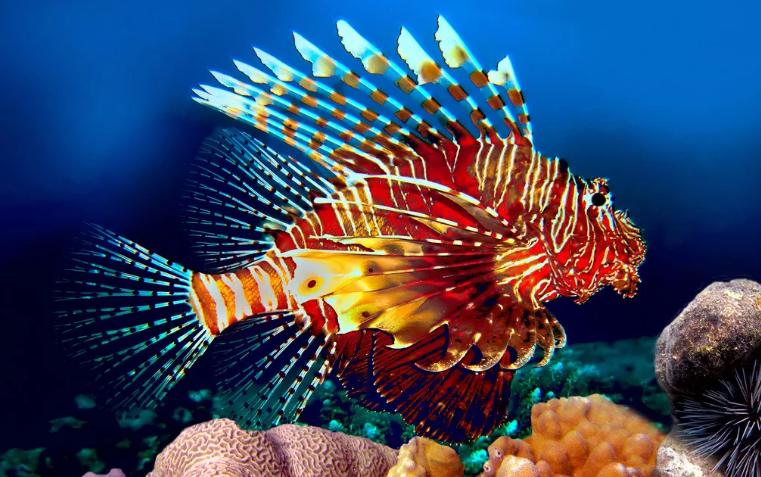 Самые ядовитые рыбы со всего Мира
