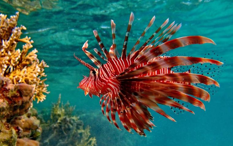 Ядовитая пятерка рыб со всего Мира