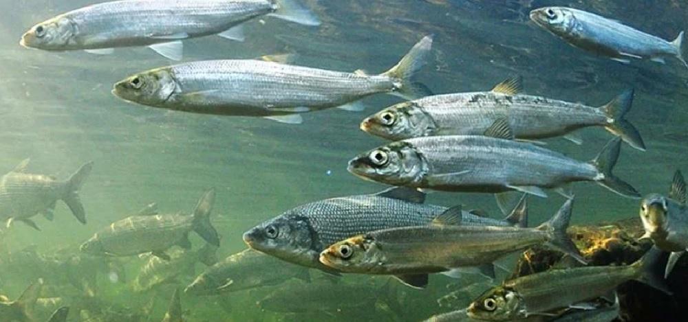 Какую рыбу можно выловить в озере Байкал