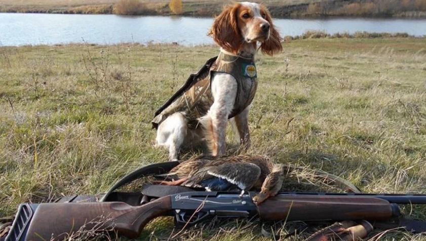Охота с незарегистрированными ружьями фиксируется все чаще