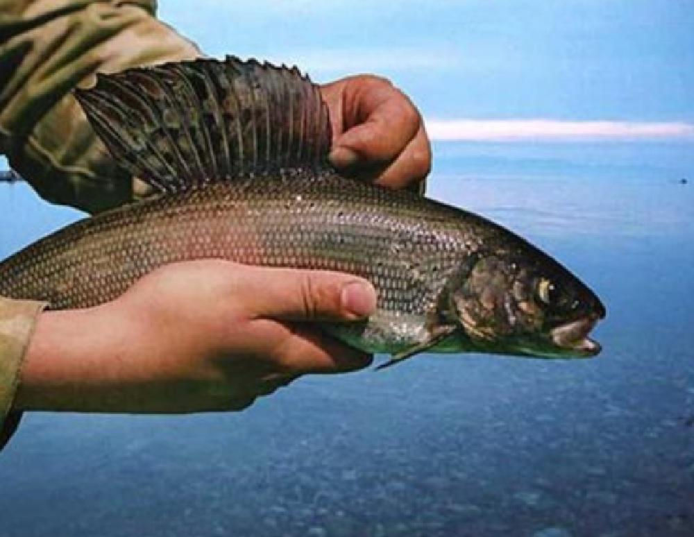 Осенняя рыбалка на Байкале